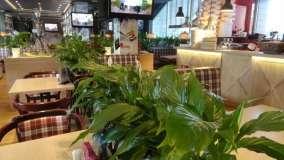 Итальянское Кафе La Piola (Ла Пиола) фото 7