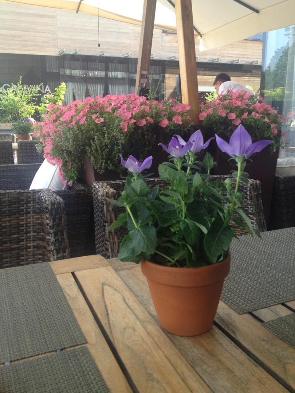 Ресторан Авеню в Барвихе (A.V.E.N.U.E) фото 11