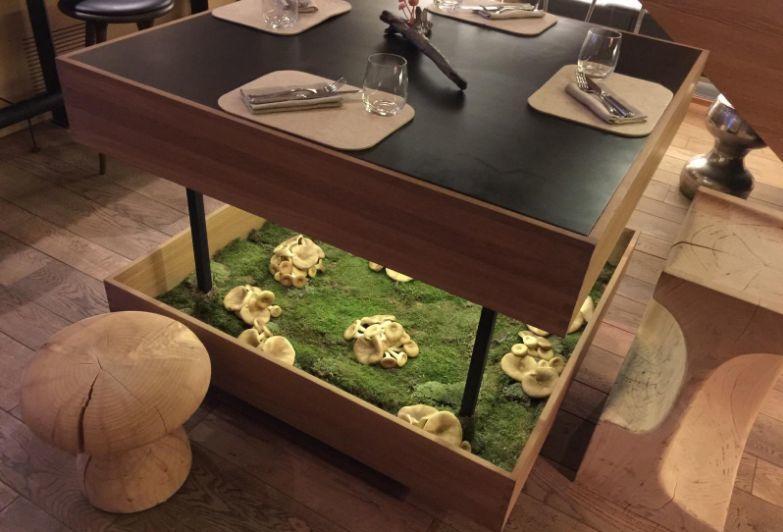Ресторан Mushrooms (Машрумс) фото 25