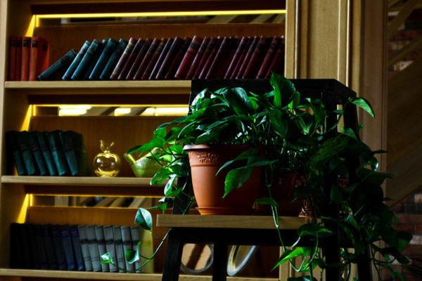 Кафе Библиотека в Новопеределкино фото 6