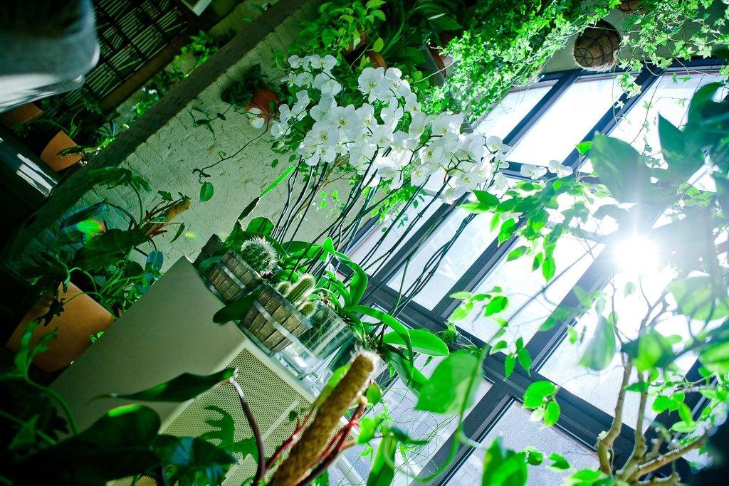 Ресторан The Сад (З Сад) фото 24