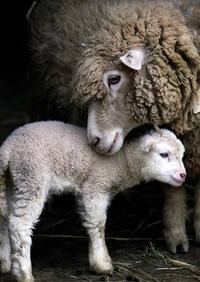 Воспользуйтесь возможностьою забронировать ресторан на Новый год через портал GdeBar.ru, и пусть год зелёной деревянной овцы будет для вас счастливым (как и все последующие!).